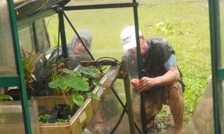 Find Vacation Volunteer Opportunties on Maui